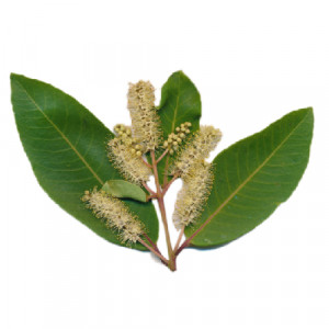 Maruthampattai (Terminalia arjuna)-cleaned and purified form-1 kg