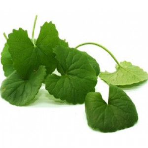 Vallarai (Centella asiatica)-100% cleaned form-1 kg